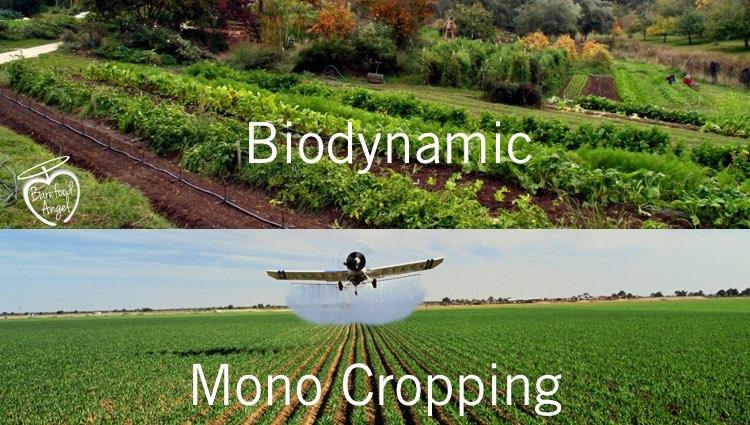 mono-cropping-vs-biodynamic-001