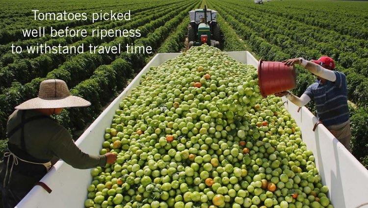 trucking-unriped-produce-001