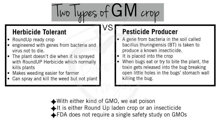 gmo-insecticide-tolerant-vs-pesticide-producer-001-2